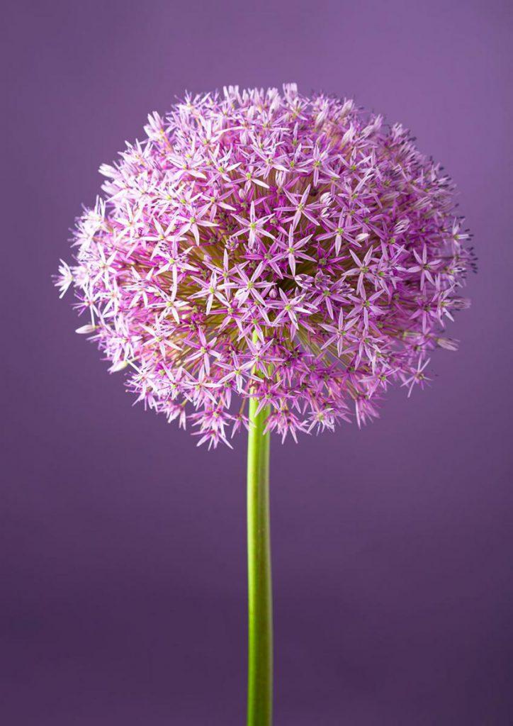 PurpleFloer